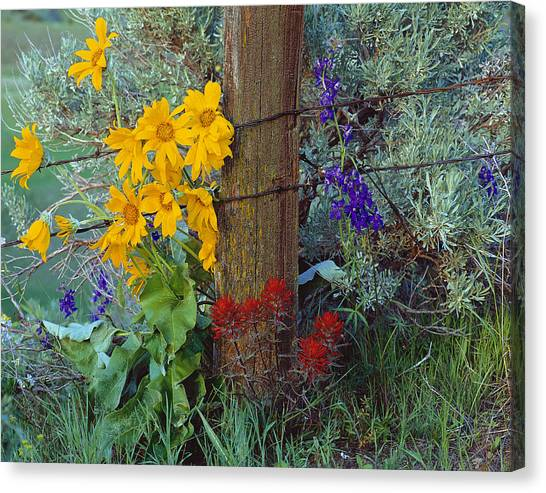 Rural Spring Canvas Print