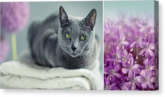 Purebred Canvas Print - Russian Blue Collage by Nailia Schwarz