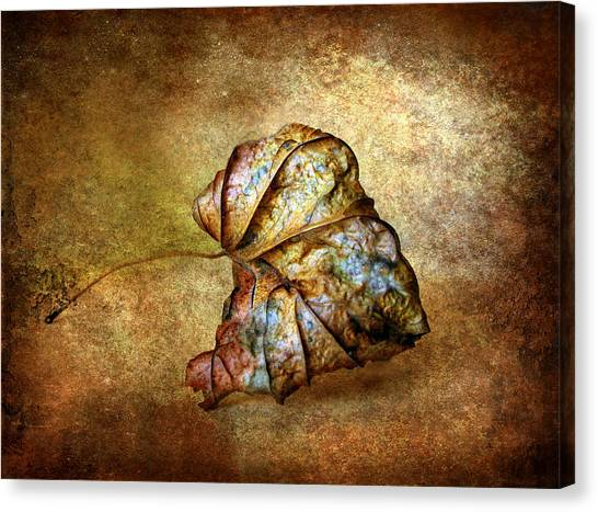 Remnants Canvas Print - Rustic by Jessica Jenney