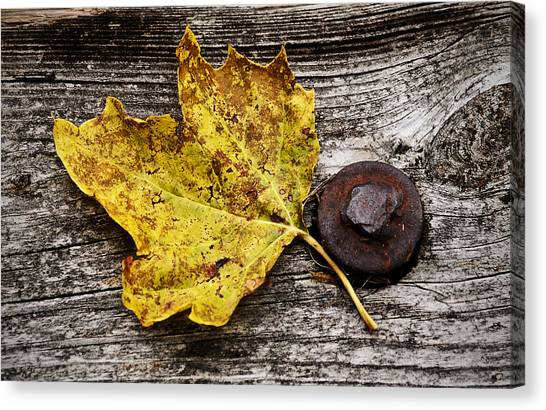 Rustic Leaf Canvas Print