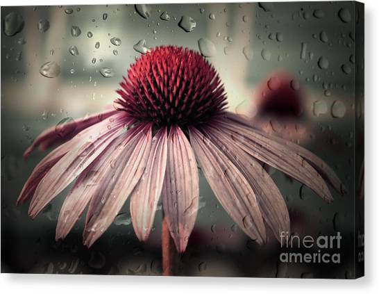 Daisy Canvas Print - Sad Solitude by Aimelle