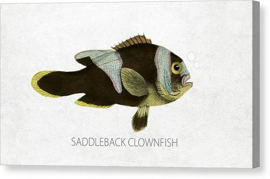 Clownfishes Canvas Print - Saddleback Clownfish by Aged Pixel