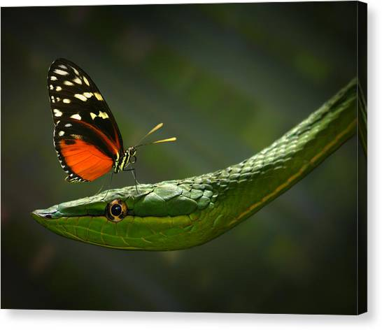 Costa Rican Canvas Print - Safe Spot? by Jimmy Hoffman