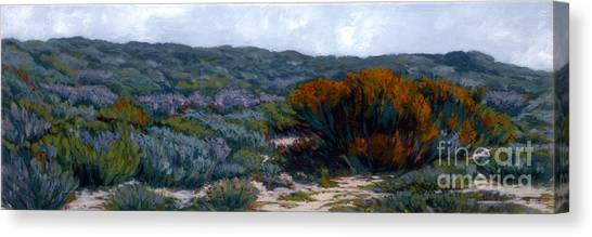 Sage On The Dunes Canvas Print