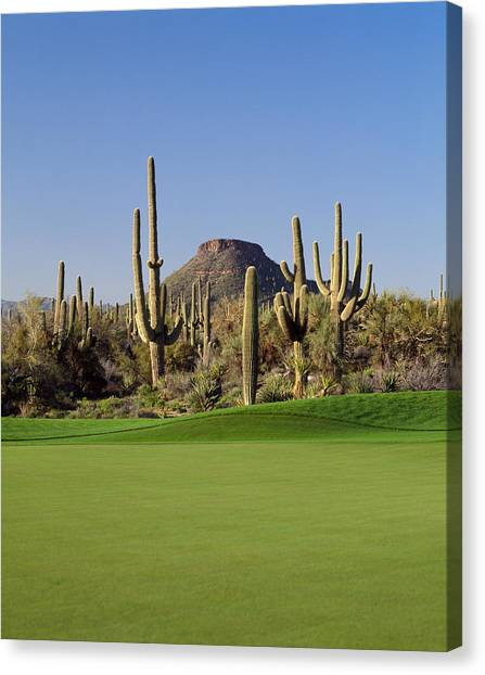 Absence Canvas Print - Saguaro Cacti In A Golf Course, Troon by Panoramic Images
