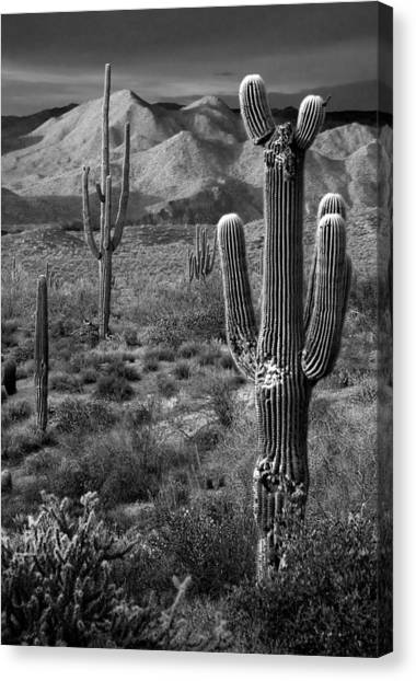 Desert Sunsets Canvas Print - Saguaro Cactus In Black And White At Sunset by Dave Dilli