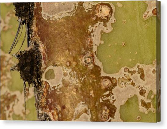 Saguaro Details I Canvas Print