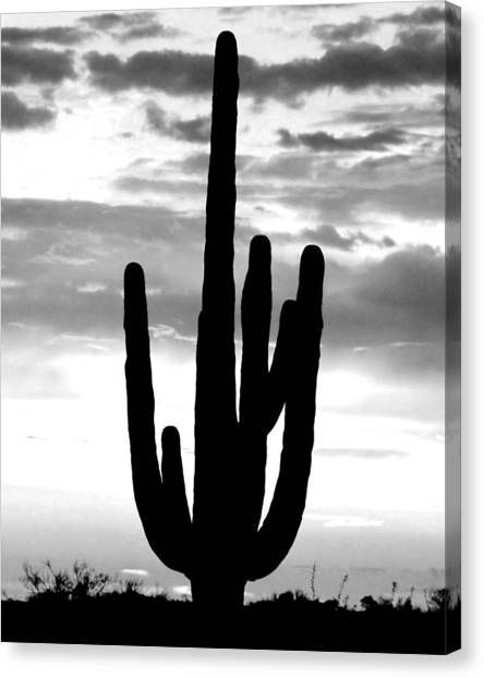 Saguaro In Black And White Canvas Print