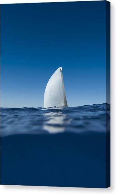 Sail Fin Canvas Print by Chris Cameron