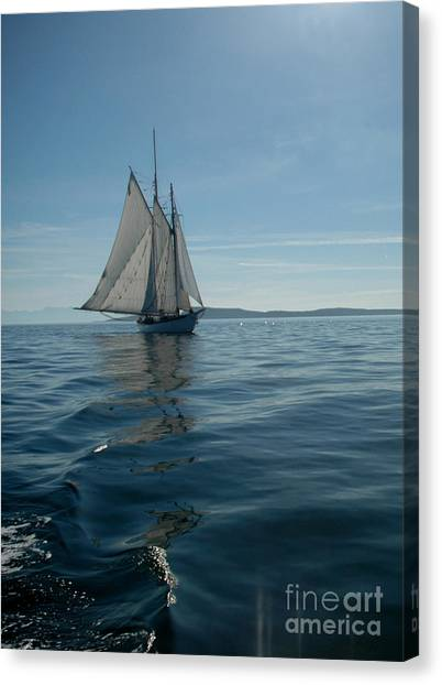 Sail The Blue Canvas Print