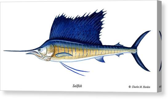 Sailfish Canvas Print