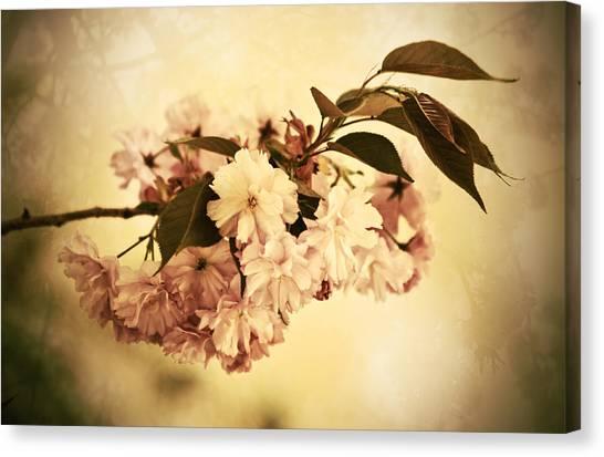 Susann Serfezi Canvas Print - Sakura by AugenWerk Susann Serfezi