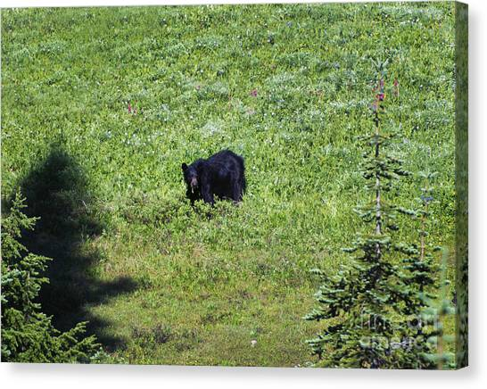 Black Bears Canvas Print - Salad For Dinner by Mike  Dawson