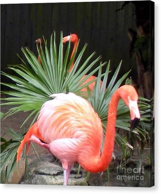 Salmon Flamingos Canvas Print