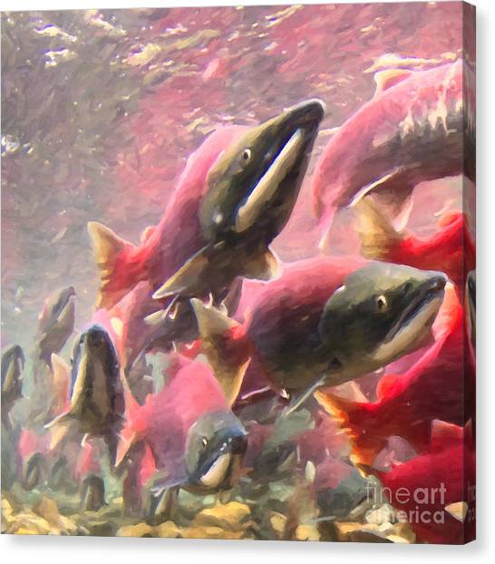Salmon Run - Square - Painterly - 2013-0103 Canvas Print by Wingsdomain Art and Photography