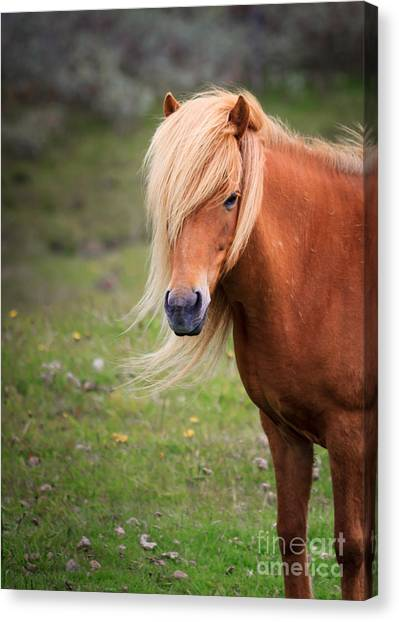 Salon Perfect Pony Canvas Print