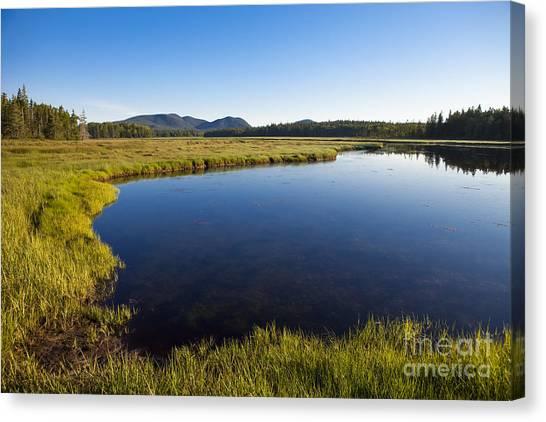 Marsh Grass Canvas Print - Salt Pond At Acadia by Diane Diederich