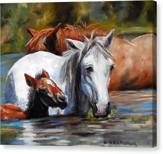 Salt River Foal Canvas Print