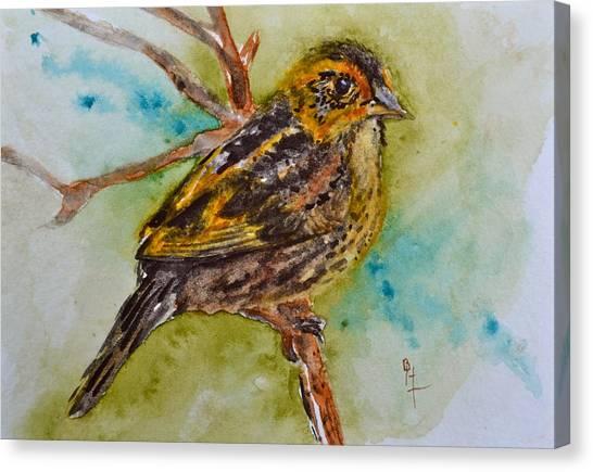 Saltmarsh Sparrow Canvas Print