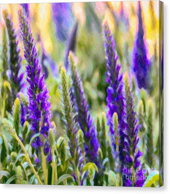 Salvia Sway Canvas Print