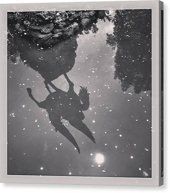 Pegasus Canvas Print - #salzburg #mirabell #austria by Flavio Sagae