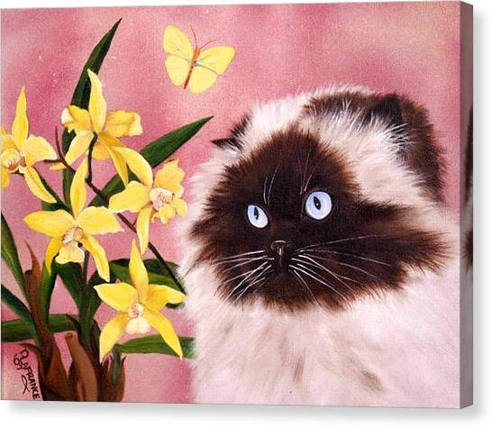 Himalayan Cats Canvas Print - Sam by Debbie LaFrance