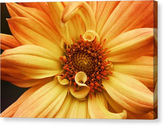 San Francisco Flower Canvas Print