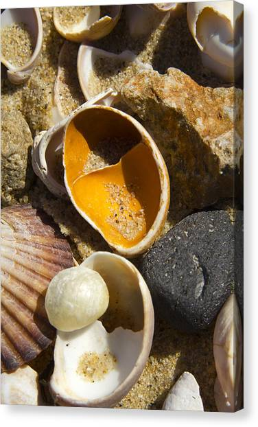 Sand Covered Shells Canvas Print by Eugene Bergeron