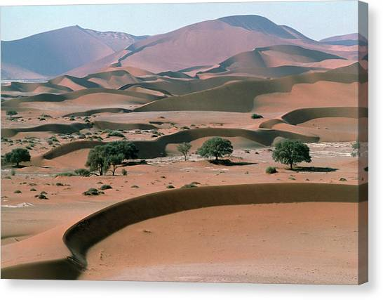 Namib Desert Canvas Print - Sand Dunes by Dr Juerg Alean/science Photo Library