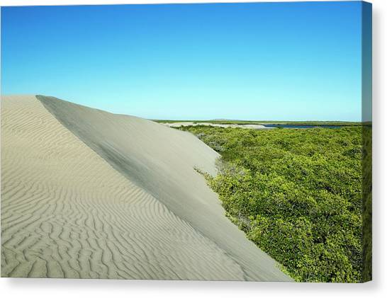 Mangrove Trees Canvas Print - Sand Dunes Encroaching On Mangroves by Christopher Swann/science Photo Library