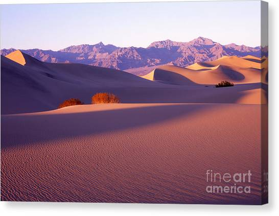 Sand Dunes In Death Valley Canvas Print