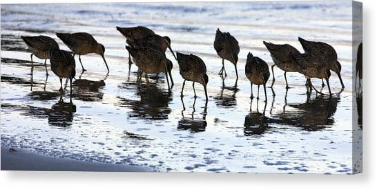 Sand Pipers Reflected Canvas Print