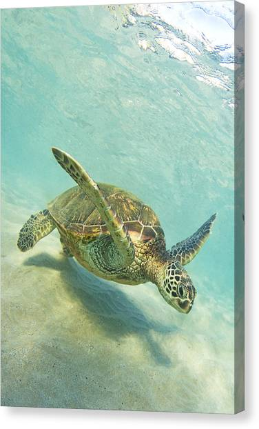 Sand Surfing Canvas Print