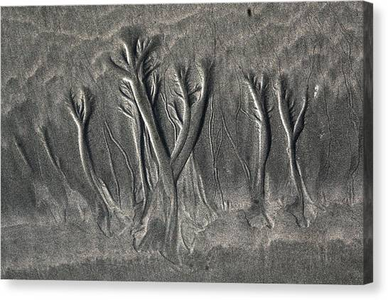 Sand Trees Canvas Print