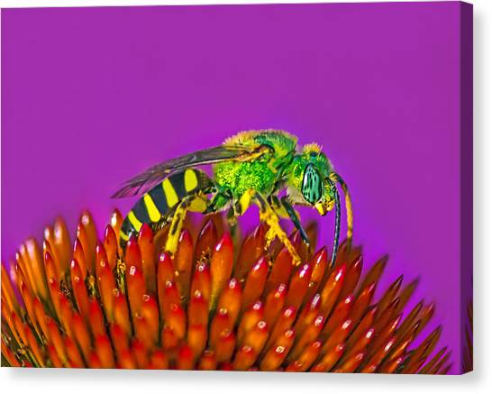 Sand Wasp Canvas Print