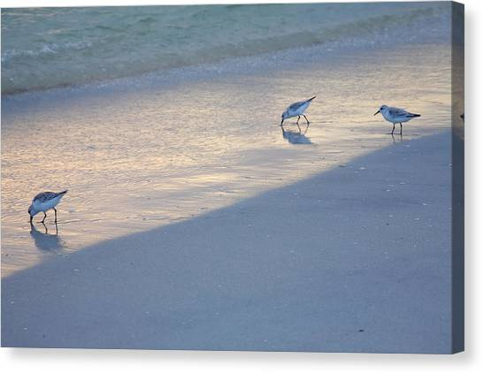 Sanderlings At Dusk I  Canvas Print