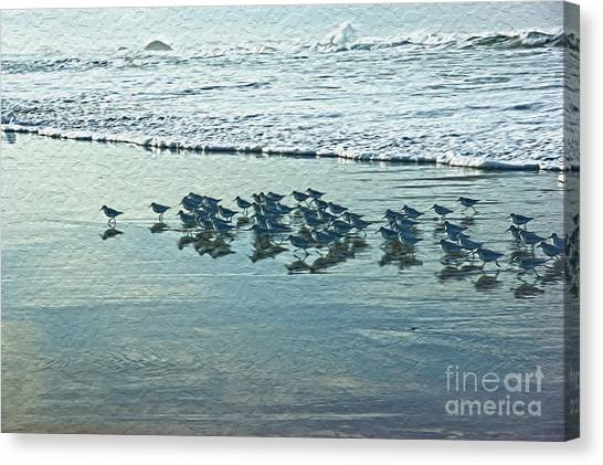 Sanderlings Canvas Print by Nur Roy