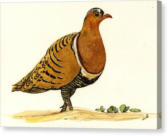 Sandgrouse Canvas Print by Juan  Bosco