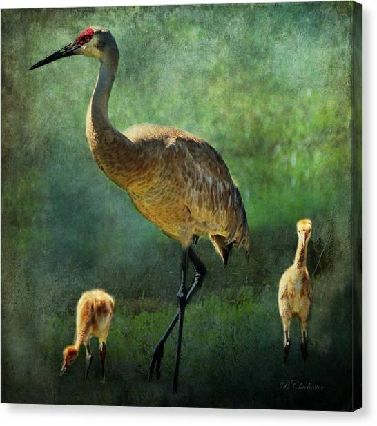 Sandhill And Chicks Canvas Print