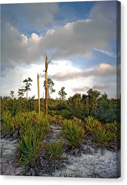 Sandhill And Clouds II. Lake Lizzie Preserve. Canvas Print
