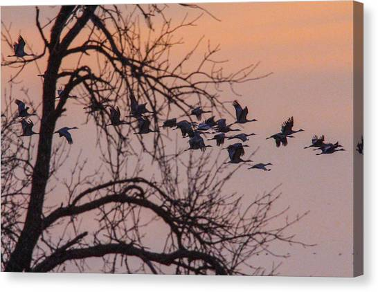 Sandhill Crane Across The Sky Canvas Print by Jill Bell