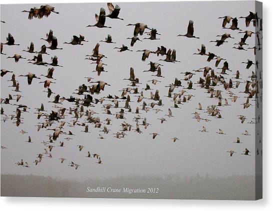 Sandhill Crane Migration Canvas Print