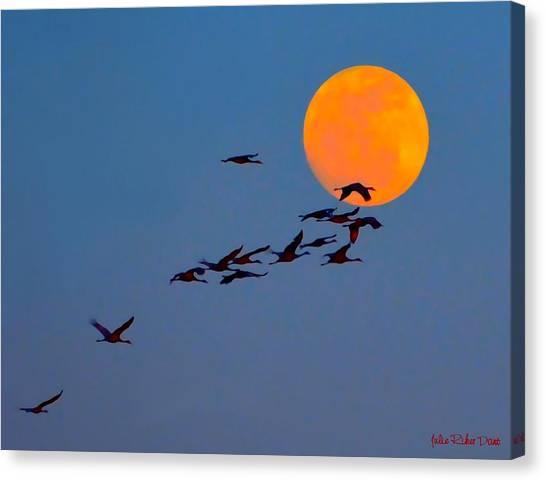 Migration Path Of Sandhill Cranes Canvas Print - Sandhill Crane Migration by Julie Dant