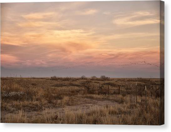 Sandhill Cranes At Sunset Canvas Print