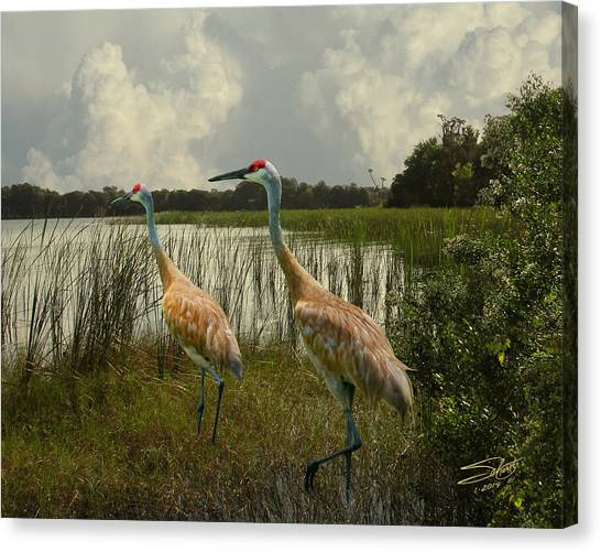 Sandhill Cranes Courting Canvas Print