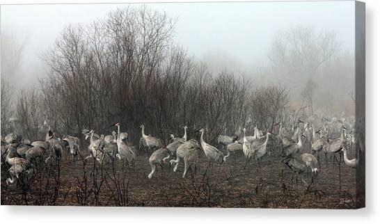 Sandhill Cranes In The Fog Canvas Print