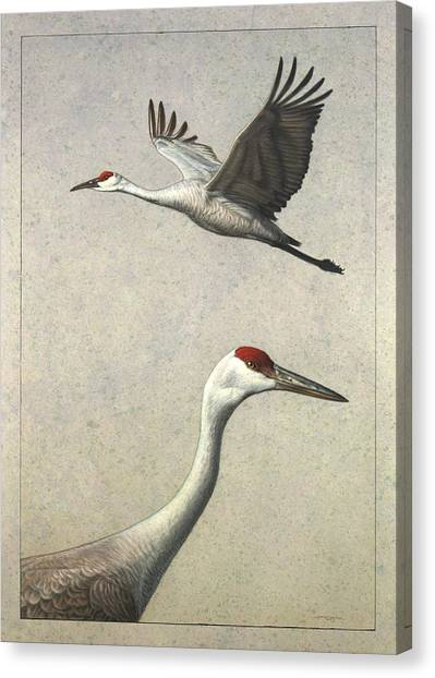 Cranes Canvas Print - Sandhill Cranes by James W Johnson