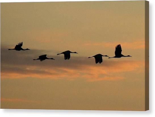 Sandhill Cranes Over Horicon Marsh Canvas Print