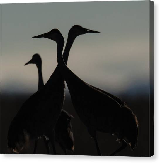 Sandhill Crossing Canvas Print