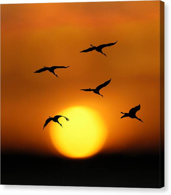 Sandhill Sunset Canvas Print